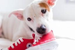 ensaio gestante com cachorro e sapatinho all star